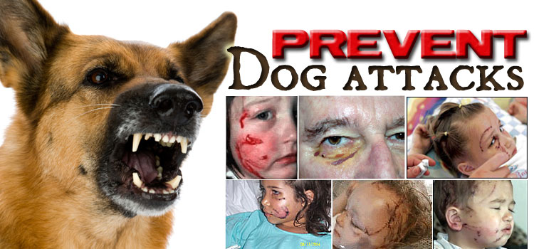 Prevent Dog Attacks